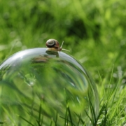 tiny snail crawling on top of glass globe sitting in green grass