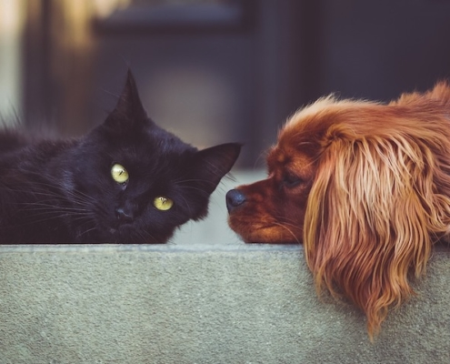 a cat and a dog laying on a cement wall facing each other